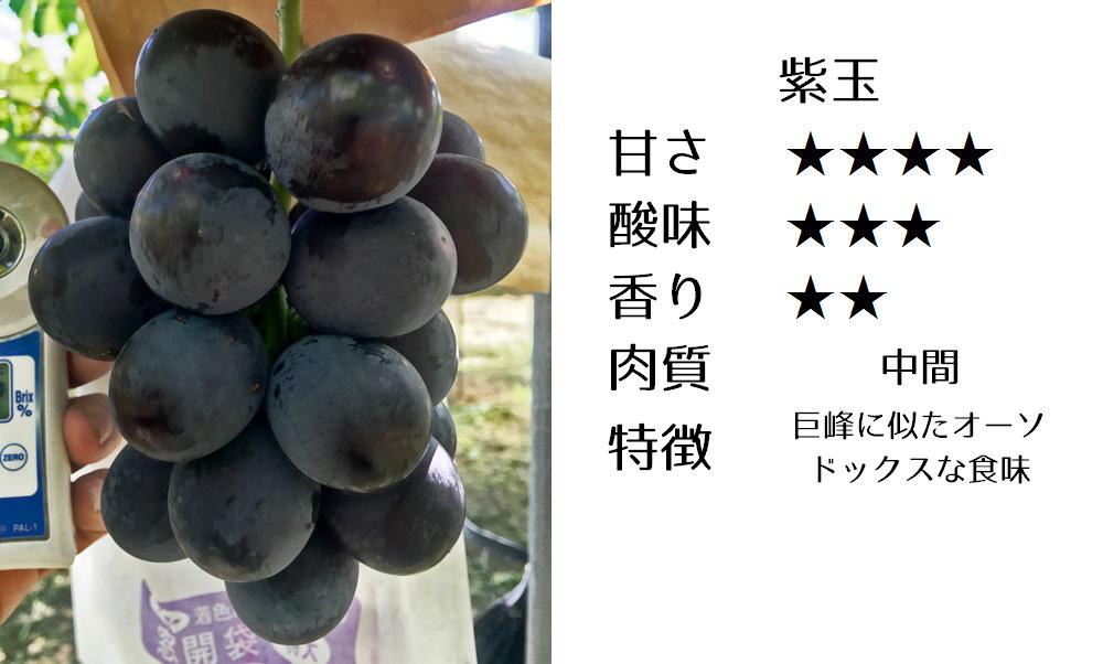 紫玉の食味評価