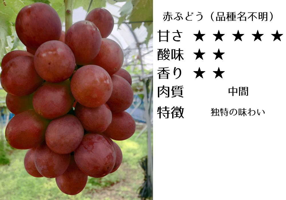 赤ぶどう(品種名不明)の食味評価