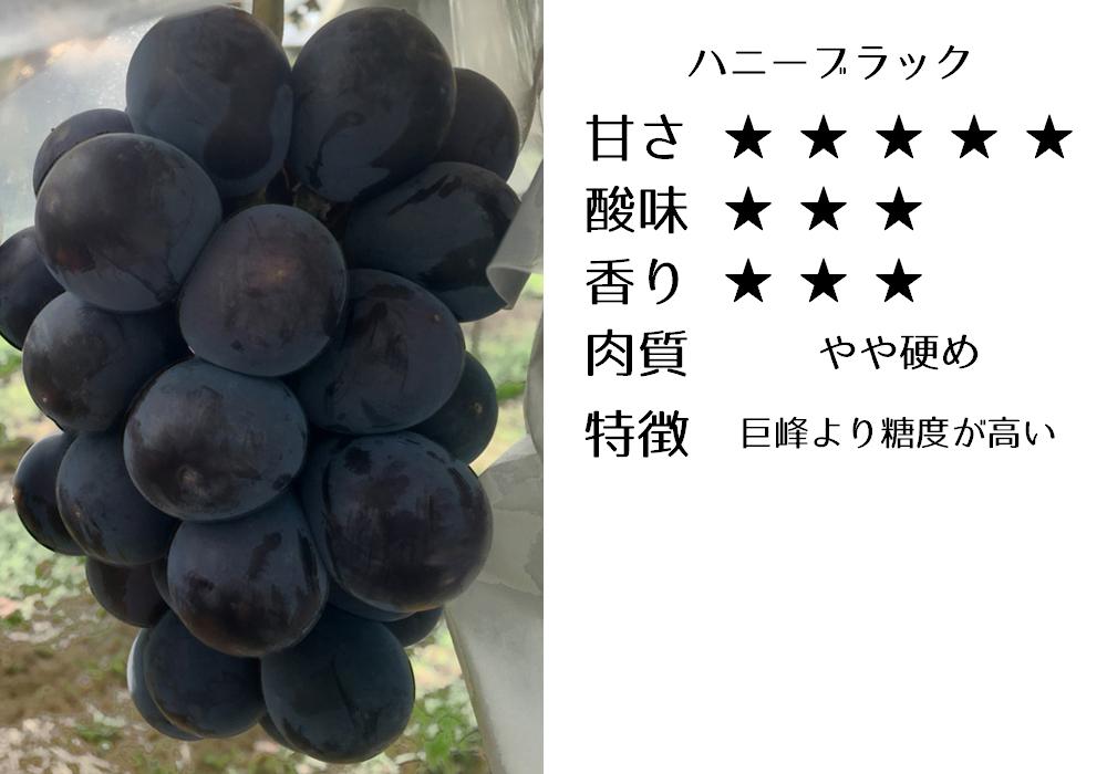 ハニーブラックの食味評価
