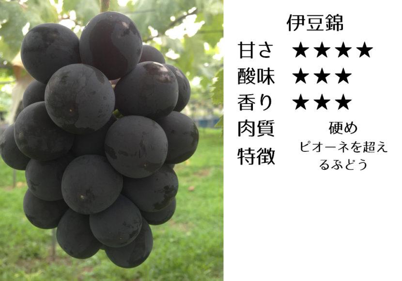 伊豆錦の食味評価